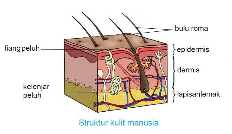 Image result for banyak lemak terbakar bila banyak berpeluh